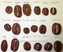 Кофе TREVI в зернах и молотый для ценителей. Выкупаю 2 раза в неделю.
