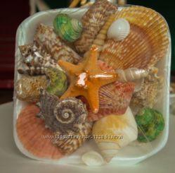Набор морских ракушек. Сувенир
