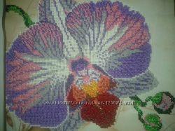 Орхидея- красавица