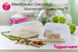 Умная сырница TUPPERWARE , Наслаждайся любимым сыром и нарезкой