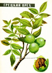 Масло грецкого ореха 500мл