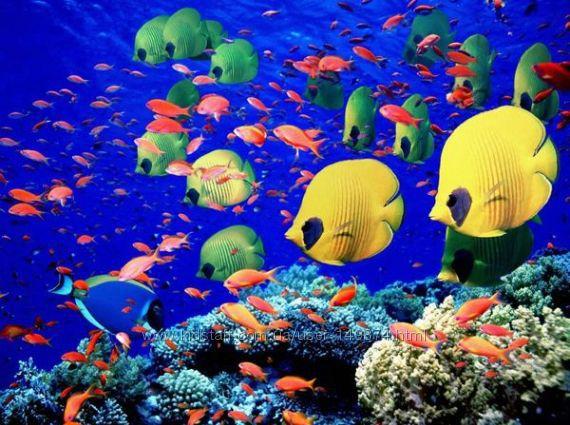 Волшебное Красное море и лето круглый год. Египет от VIVANTA