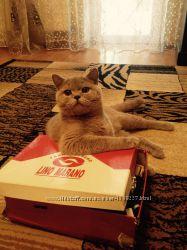 Отдам кота готоандский