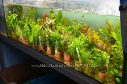 Аквариумные растения большой выбор