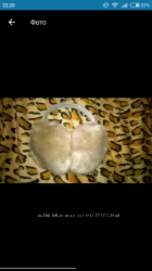 Ушки женские