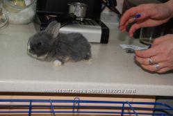 Микро мини карликовые кролики