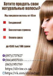 Продать волосы дорого  Харьков, Куплю волосы Харьков, Скупка волос в Харько