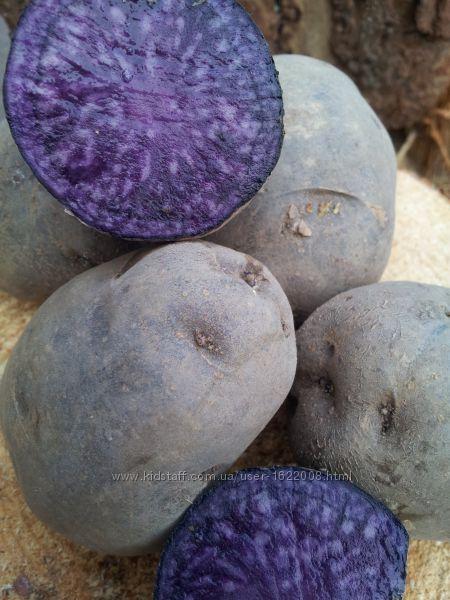 Синий фиолетовый картофель